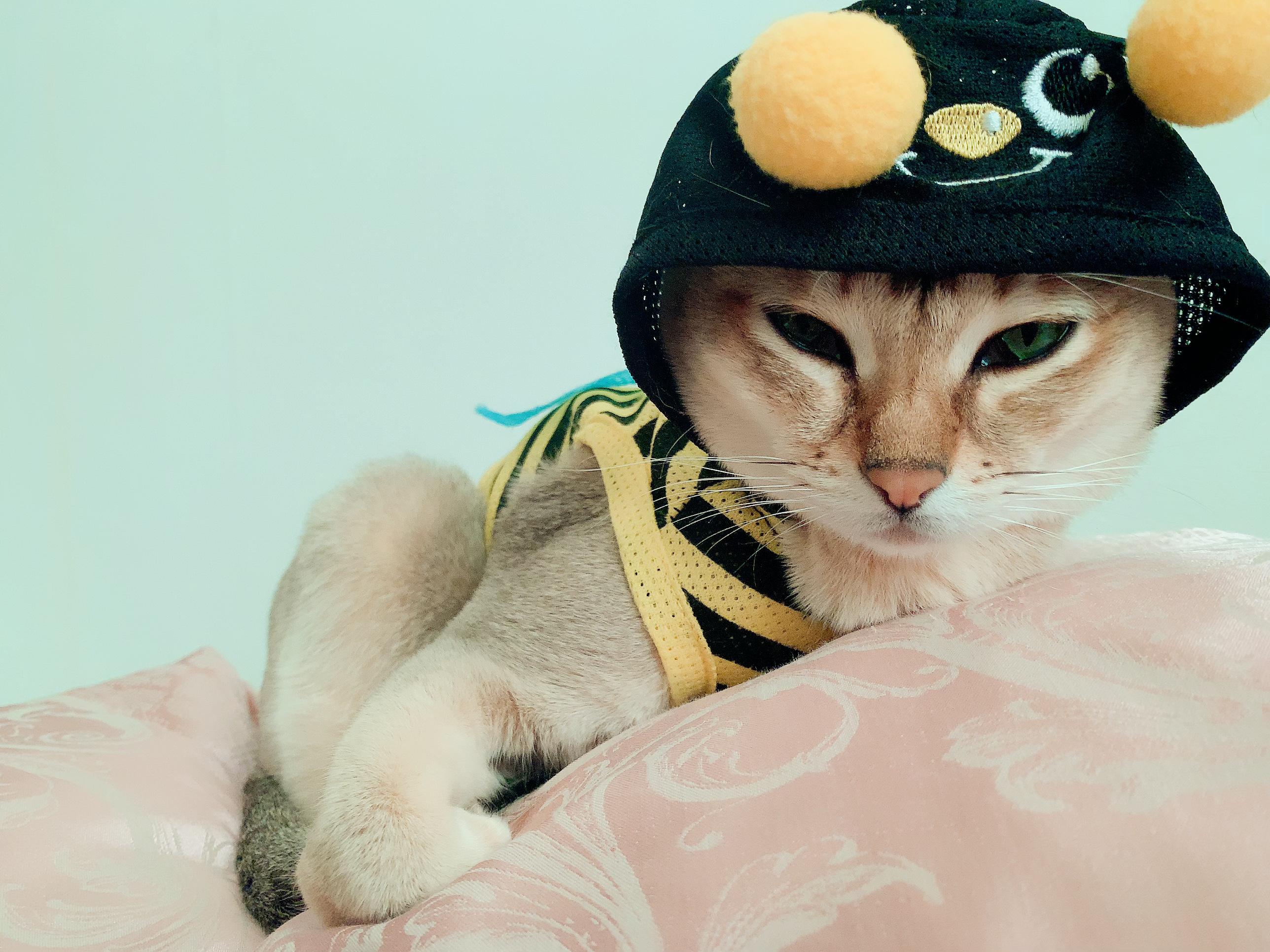 ネコてんちょう|Birch - バーチ -